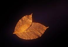 Folhas artificiais Imagem de Stock