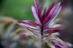 Folhas azuis cor-de-rosa fotos de stock