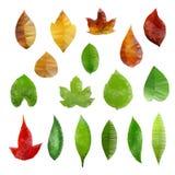 Folhas Baixo-polis Foto de Stock