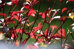Folhas bonitas fotografia de stock
