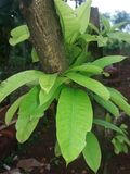Folhas bonitas Imagem de Stock