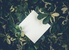 Folhas bonitas com fundo branco do espaço da cópia no jardim projeto de conceitos da natureza Para a apresentação foto de stock royalty free