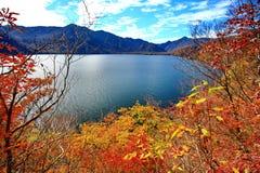 Folhas bonitas de Momiji do bordo vermelho em Nikko imagens de stock