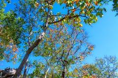 Folhas bonitas de surpresa do autumm amarelas e árvores alaranjadas imagens de stock