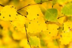 Folhas bonitas em uma árvore no outono Fotos de Stock Royalty Free