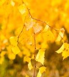 Folhas bonitas em uma árvore no outono Imagens de Stock Royalty Free