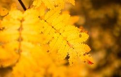 Folhas bonitas em uma árvore no outono Imagem de Stock Royalty Free