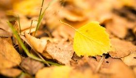 Folhas bonitas em uma árvore no outono Foto de Stock