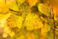 Folhas bonitas em uma árvore no outono Imagem de Stock