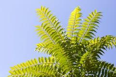 Folhas bonitas na árvore Imagem de Stock Royalty Free