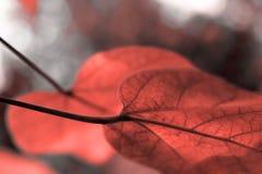 Folhas bonitas na cor do coral de vida fotografia de stock royalty free