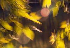 Folhas bonitas no vento Fotos de Stock
