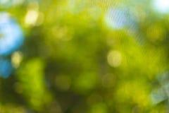 Folhas borradas na árvore Imagens de Stock Royalty Free