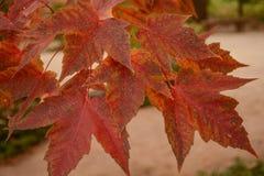 Folhas brilhantemente coloridas bonitas da queda imagem de stock royalty free