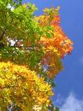 Folhas brilhantes, céu azul fotografia de stock