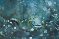 Folhas côr de avelã Fotos de Stock