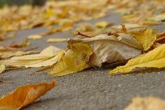Folhas caídas Fotografia de Stock