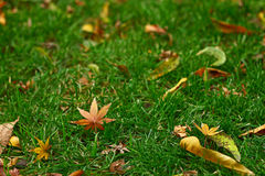 Folhas caídas Imagem de Stock Royalty Free