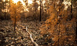 Folhas caídas Foto de Stock