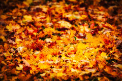 Folhas caídas Imagem de Stock