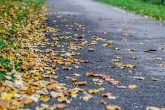 Folhas caídas Fotografia de Stock Royalty Free