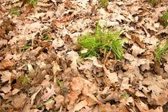 Folhas caídas Foto de Stock Royalty Free