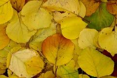 Folhas caídas Fotos de Stock