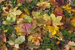 Folhas caídas Fotos de Stock Royalty Free