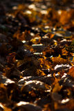 Folhas caídas alaranjadas Fotografia de Stock Royalty Free