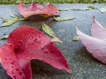 Folhas caídas brilhantes Outono atrasado fotos de stock