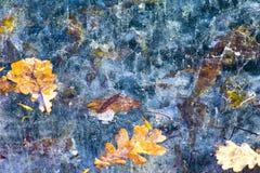Folhas caídas congeladas no gelo Imagens de Stock
