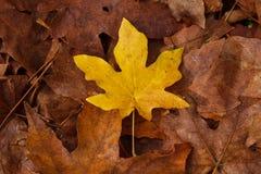 Folhas caídas da queda fotos de stock