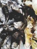 Folhas caídas da queda em um grupo 2 imagens de stock royalty free
