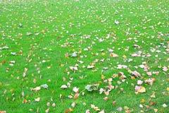 Folhas caídas das árvores na grama verde Foto de Stock Royalty Free