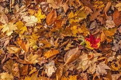 Folhas caídas das várias árvores fotos de stock royalty free