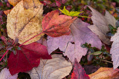 Folhas caídas de Autmn imagens de stock