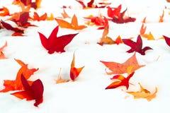 Folhas caídas de Sweetgum na neve foto de stock royalty free