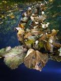 Folhas caídas do amarelo em um carro azul Foto de Stock Royalty Free