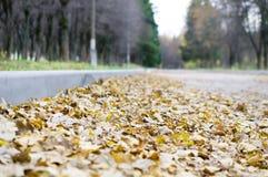 Folhas caídas do carvalho imagens de stock