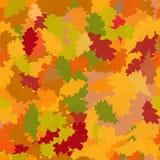Folhas caídas do carvalho Fotos de Stock Royalty Free