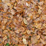 Folhas caídas do marrom na terra Fotografia de Stock Royalty Free