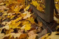 Folhas caídas e uma cerca Imagem de Stock Royalty Free