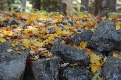 Folhas caídas em pedras em uma madeira de Nova Inglaterra Imagem de Stock