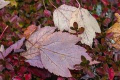 Folhas caídas em um arbusto fotografia de stock