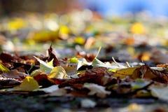 Folhas caídas em um fundo borrado e em ninguém ao redor foto de stock royalty free