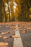 Folhas caídas em uma pista em Autumn Park Fotografia de Stock