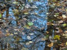 Folhas caídas na água Imagens de Stock Royalty Free