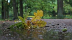 Folhas caídas na chuva vídeos de arquivo