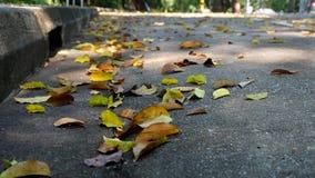 Folhas caídas na estrada Fotos de Stock Royalty Free