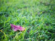 Folhas caídas na grama Fotografia de Stock